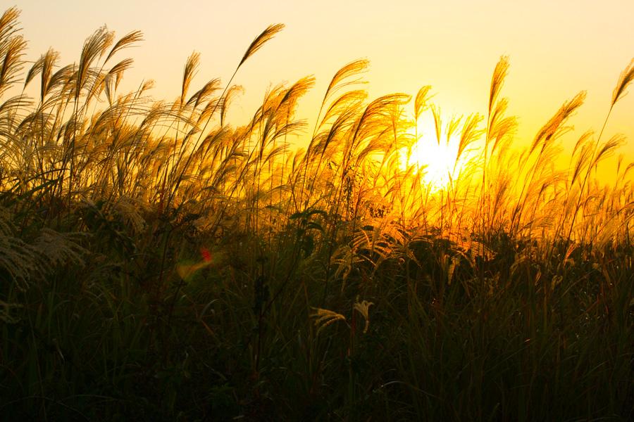 フリー 写真ススキと夕日の風景