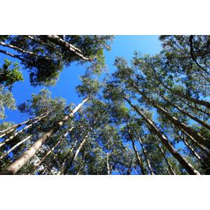 フリー写真, 風景, 自然, 森林, 樹木, 青空