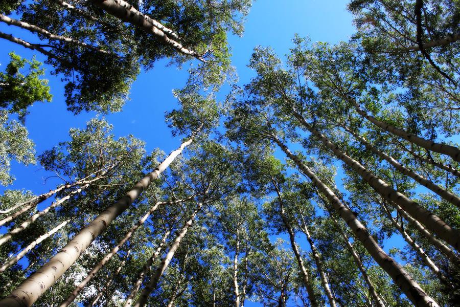 フリー 写真青空と森の木々の風景