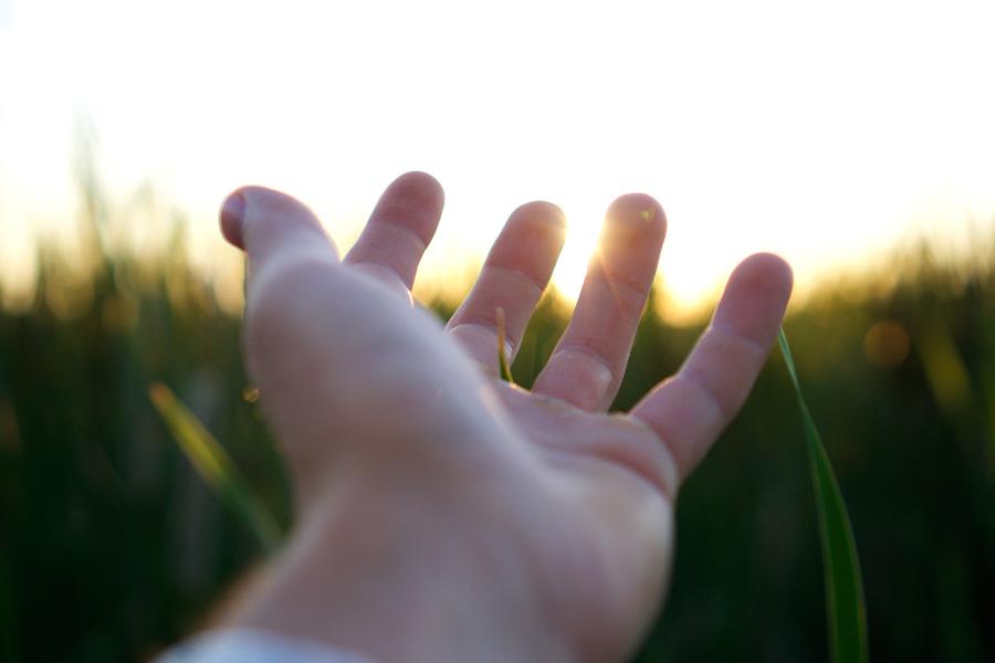 フリー 写真作物に触れる手と太陽光