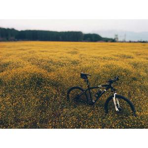 フリー写真, 風景, 草むら, 黄色の花, 乗り物, 自転車, マウンテンバイク