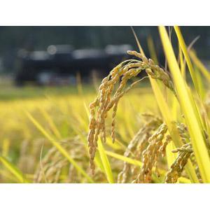 フリー写真, 風景, 作物, 稲穂, 稲(イネ), 水田(田んぼ), 秋, 田舎