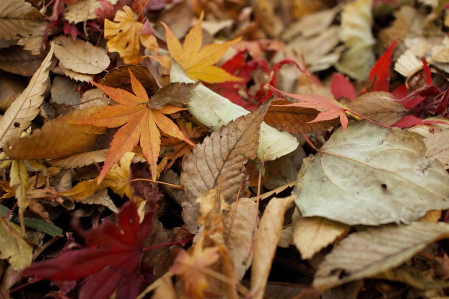 フリー 写真落葉