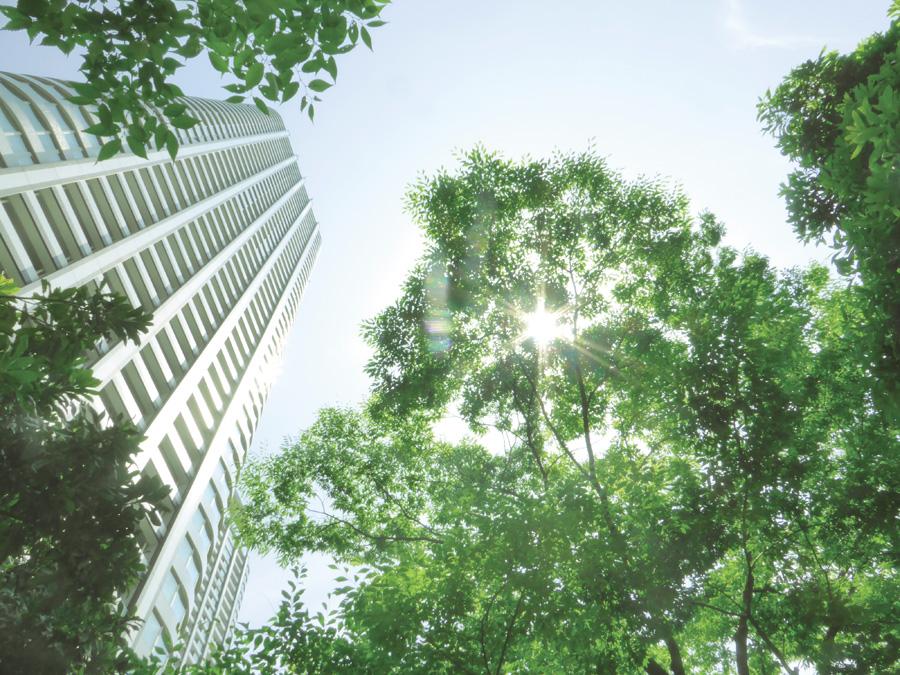 フリー 写真木と太陽光と高層マンションの風景