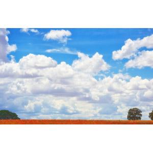 フリー写真, 風景, 自然, 空, 雲, 樹木, 花畑, ヒナゲシ(ポピー), 赤色の花
