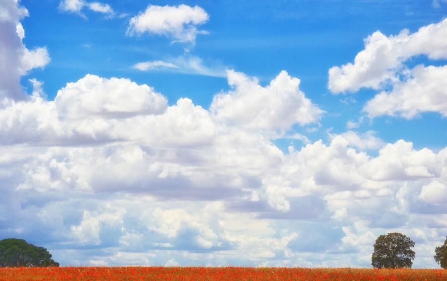 フリー 写真青空と雲とヒナゲシ畑