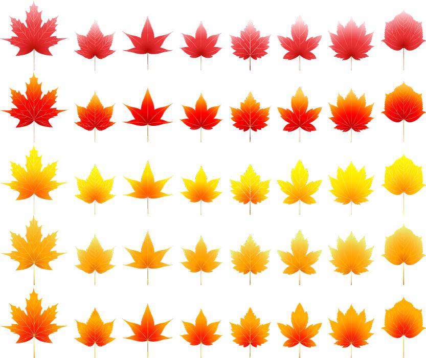フリー イラスト紅葉したカエデの葉っぱのセット