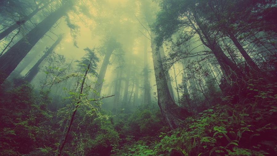 フリー 写真霧の立ち込める森の風景