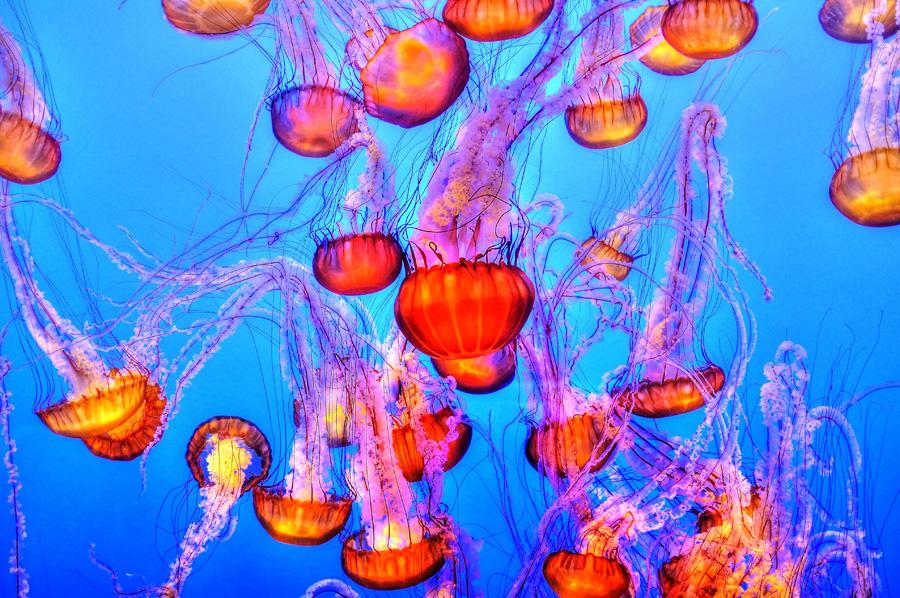 フリー 写真水中に浮かぶたくさんの水母