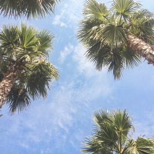 フリー写真, 風景, 自然, 空, 青空, 樹木, 椰子(ヤシ), 南国, リゾート, バカンス