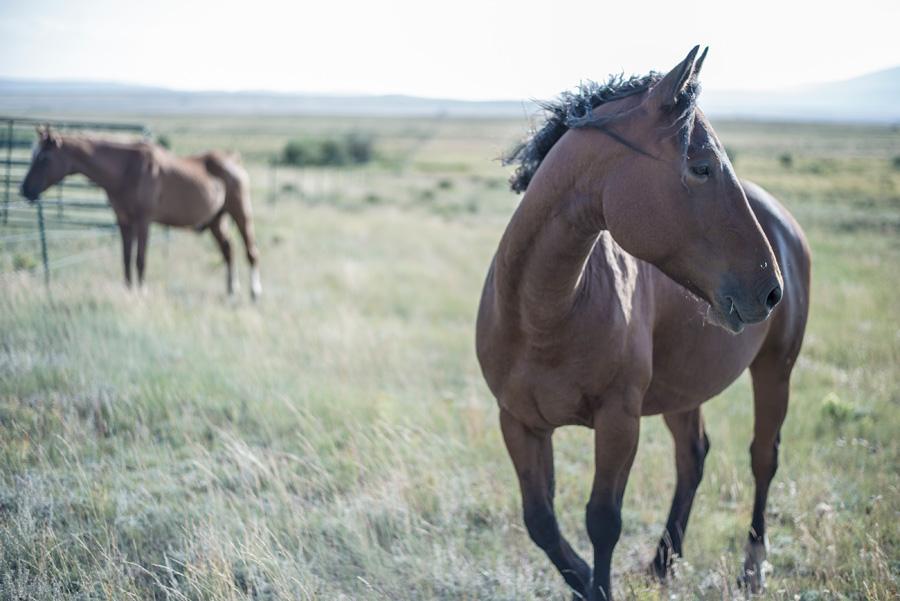フリー 写真牧場にいる馬