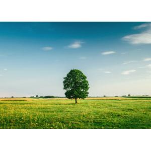 フリー写真, 風景, 自然, 樹木, 牧草地, 田舎, 青空