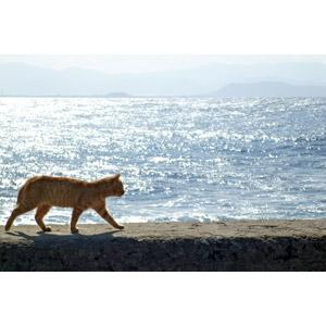 フリー写真, 動物, 哺乳類, 猫(ネコ), 茶トラ猫, 海