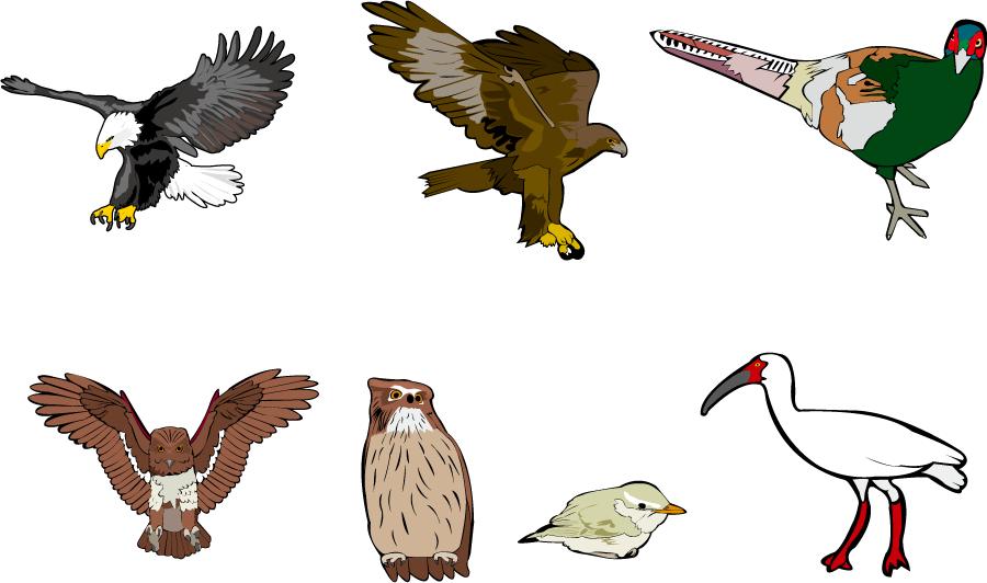 フリー イラストワシとタカとキジとフクロウとウグイスとトキ