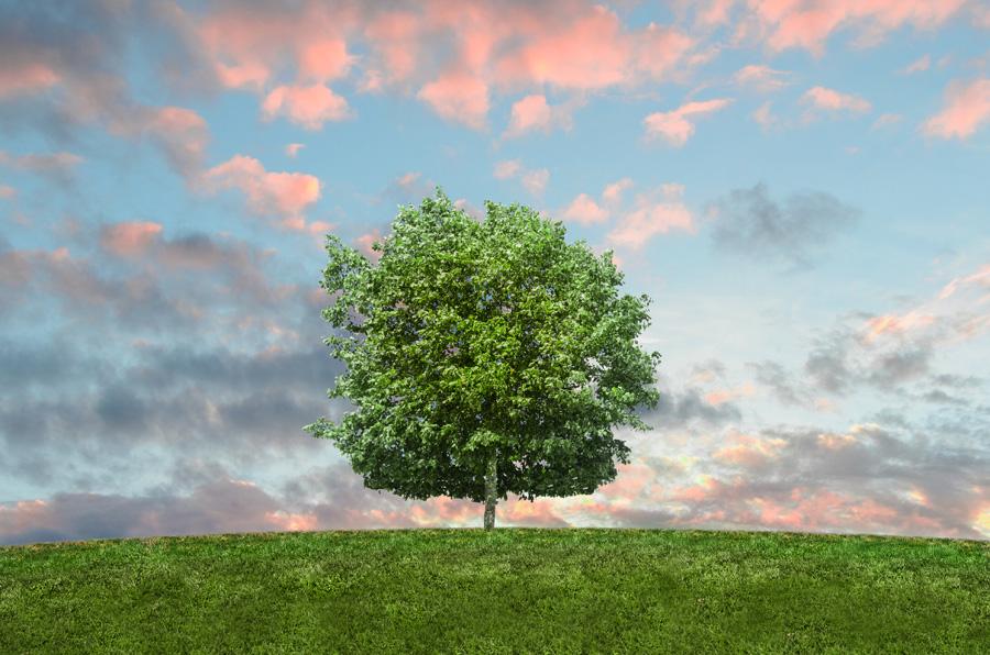 フリー 写真夕焼けと一本の木の風景