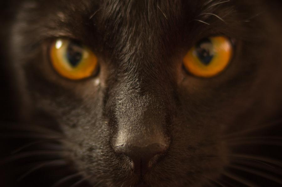 フリー 写真黒猫の顔