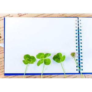 フリー写真, 背景, 画材, スケッチブック, 植物, 雑草, クローバー(シロツメクサ), 四つ葉のクローバー