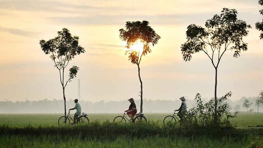 フリー 写真朝の農道を自転車に乗って仕事に出かける人々