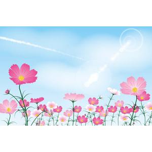 フリーイラスト, ベクター画像, EPS, 風景, 植物, 花, コスモス(秋桜), 秋, 青空