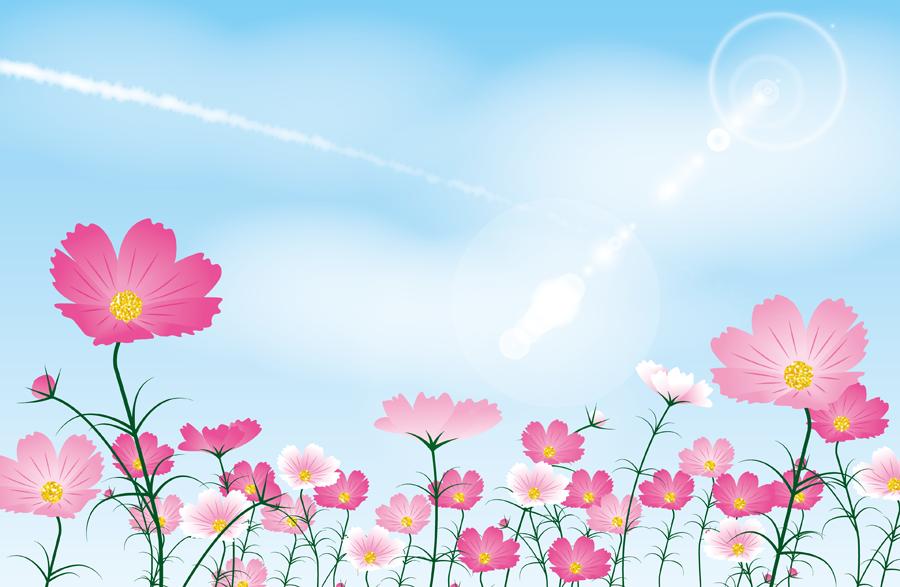 フリー イラスト青空とコスモス畑