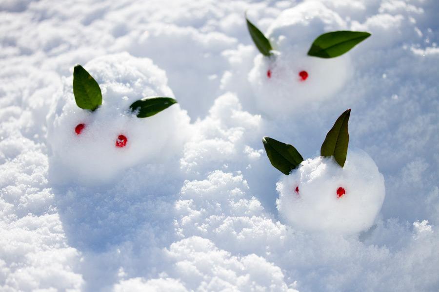 フリー 写真三匹の雪うさぎ