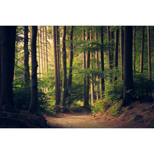 フリー写真, 風景, 自然, 森林, 樹木, 小道
