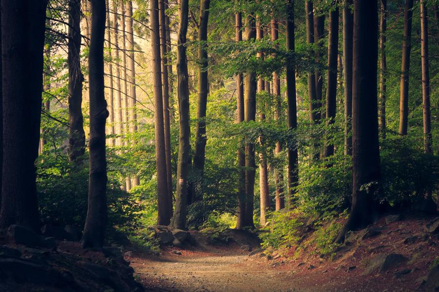 フリー 写真木々の並ぶ森の風景