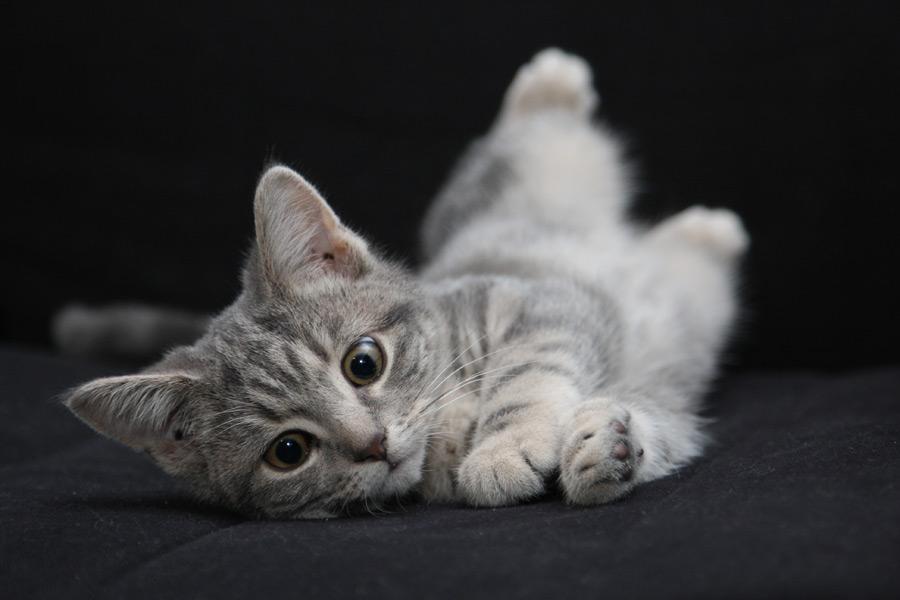フリー写真 転がる子猫