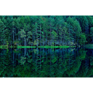 フリー写真, 風景, 自然, 池, 森林, 樹木, 日本の風景, 長野県, 緑色(グリーン)