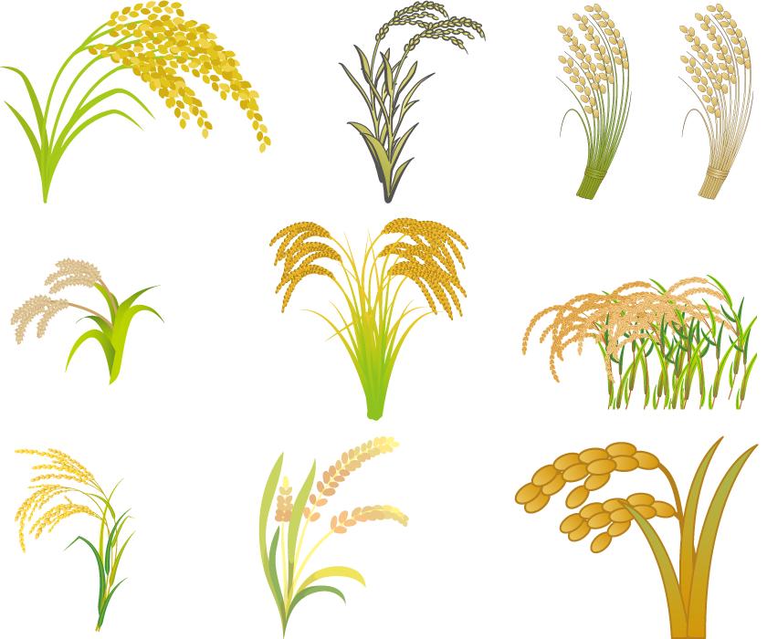 フリーイラスト 収穫を迎える9種類の稲穂のセット