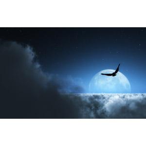 フリー写真, 風景, フォトレタッチ, 雲, 雲海, 月, 夜, 夜空, 鳥(トリ)