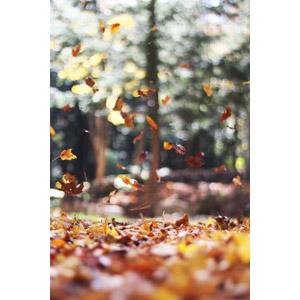 フリー写真, 風景, 自然, 森林, 植物, 落葉(落ち葉), 葉っぱ