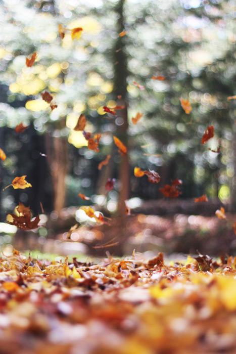 フリー写真 舞い散る落葉の風景