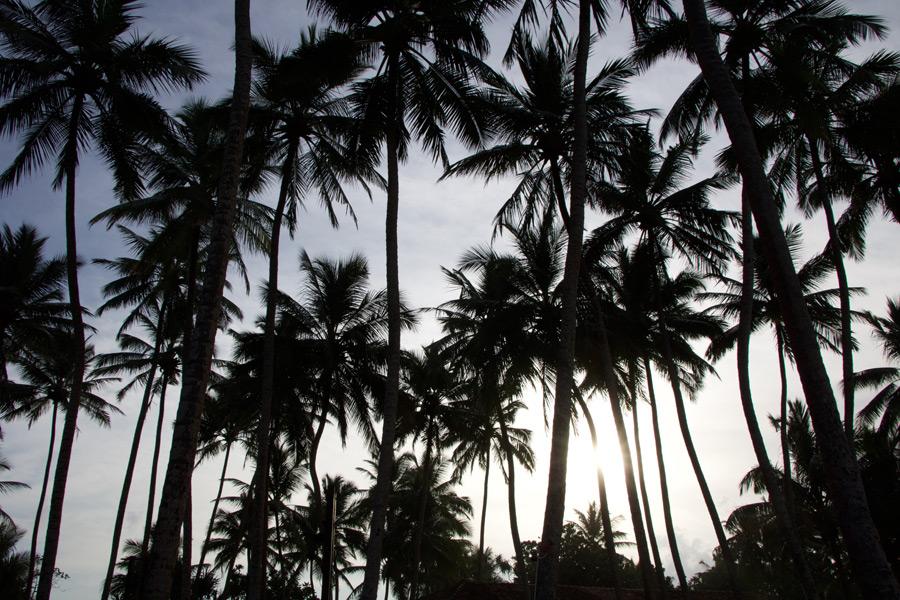 フリー写真 ヤシの木々の風景