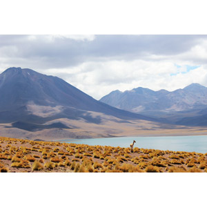フリー写真, 風景, 自然, 山, 湖, 動物, 哺乳類, ビクーニャ