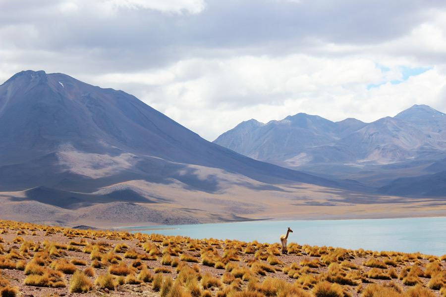 フリー写真 山と湖とビクーニャのいる風景