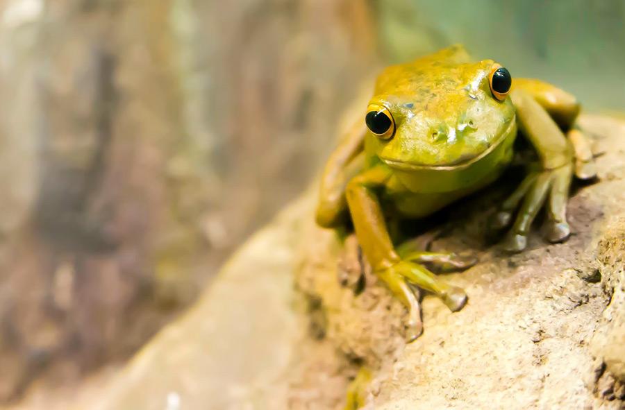 フリー写真 カエル