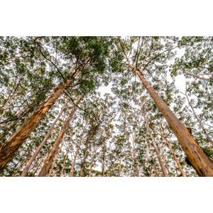フリー写真, 風景, 自然, 森林, 樹木