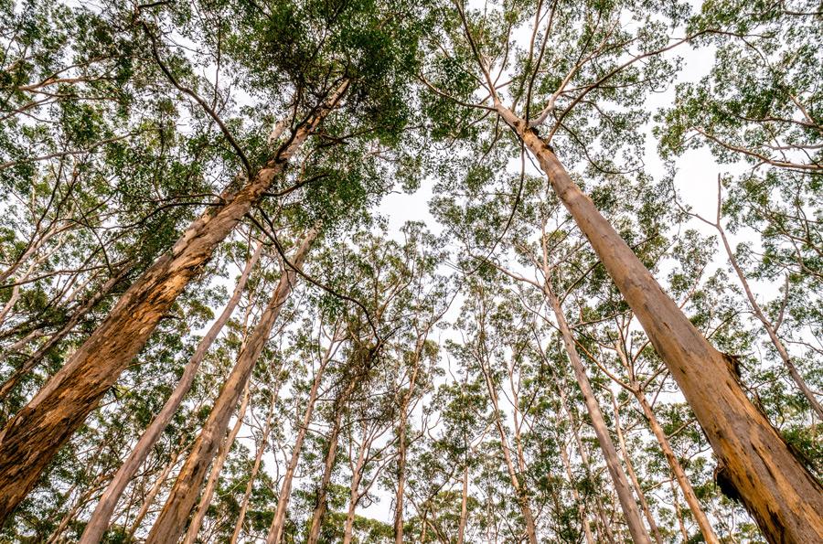 フリー写真 森の木々の風景