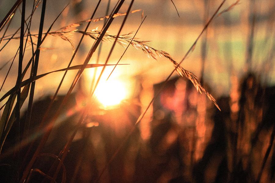 フリー写真 草と夕日の風景