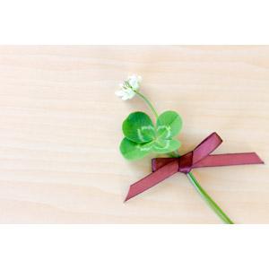フリー写真, 植物, 雑草, クローバー(シロツメクサ), 四つ葉のクローバー, リボン