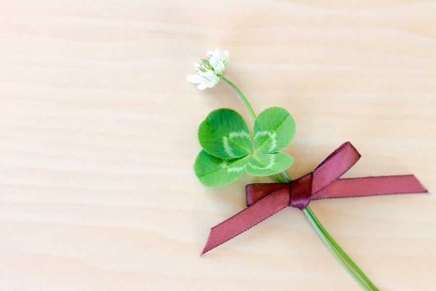 フリー写真 四つ葉のクローバーとシロツメクサの花