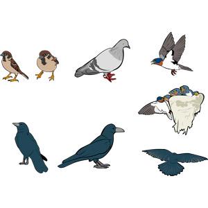 フリーイラスト, ベクター画像, AI, 動物, 鳥類, 鳥(トリ), 雀(スズメ), 鳩(ハト), 燕(ツバメ), 親子(動物), 雛(ヒナ), 烏(カラス)