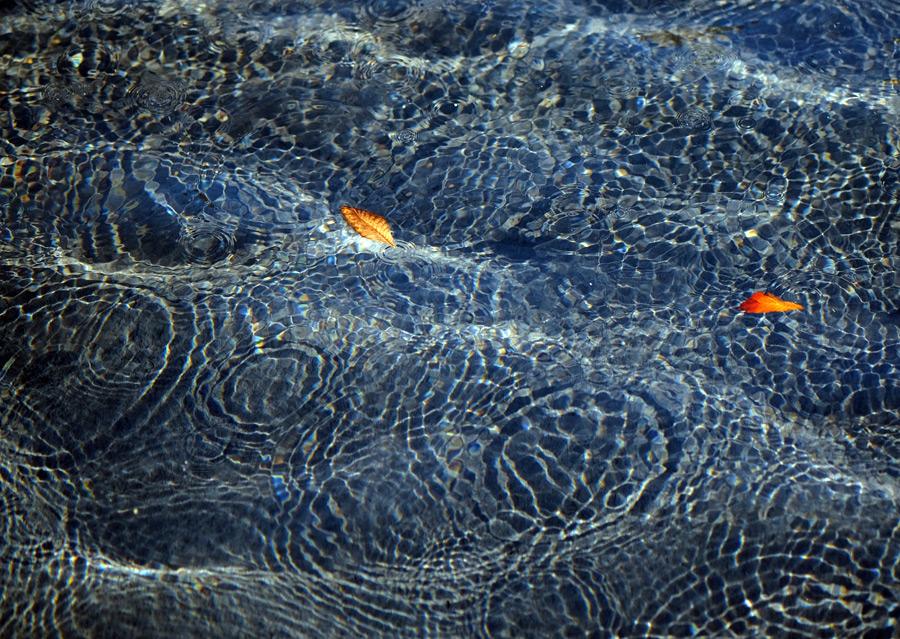 フリー写真 水の波紋と水面を漂う落葉