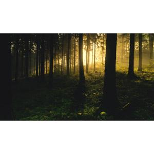 フリー写真, 風景, 自然, 森林, 樹木, 朝日, 霧(霞), 早朝