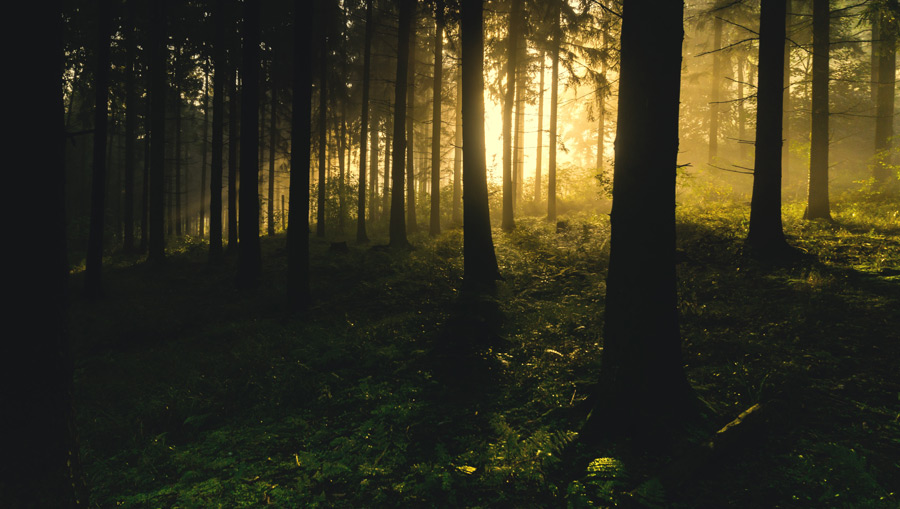 フリー写真 朝日が射し込む森の風景