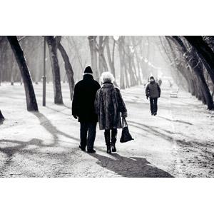 フリー写真, 人物, カップル, 夫婦, 老人, 祖父(おじいさん), 祖母(おばあさん), 後ろ姿, 並木道, 歩く, 散歩