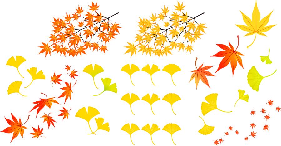 フリーイラスト 紅葉したモミジとイチョウの落ち葉のセット
