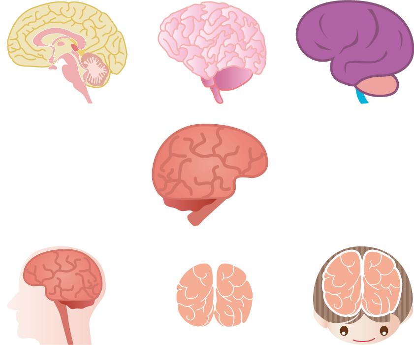 フリーイラスト 7種類の脳のセット