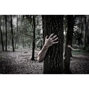 フリー写真, 人体, 手, 森林, 樹木, 風景